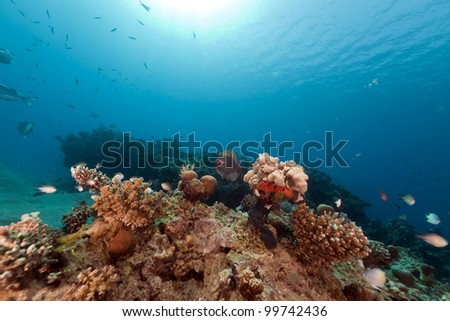 Fish and tropical reef in the Red Sea
