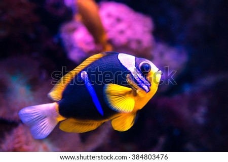 Fish, Aquarium  - stock photo
