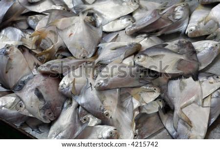 fish at the market - stock photo