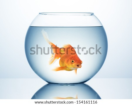 Fish bowl with swimming gold fish - stock photo
