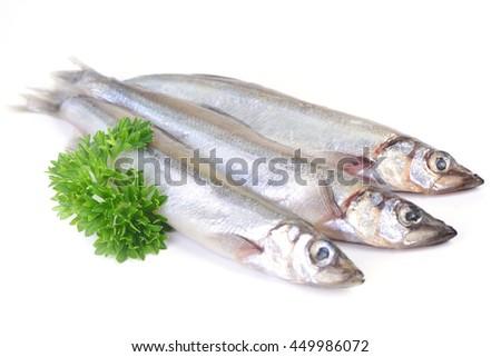 Fish capelin - stock photo