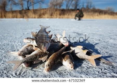 Fish caught on the ice of a lake