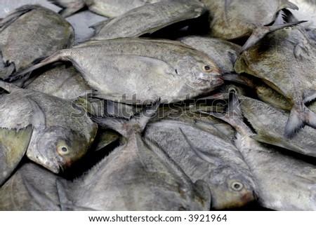 fish close up - stock photo