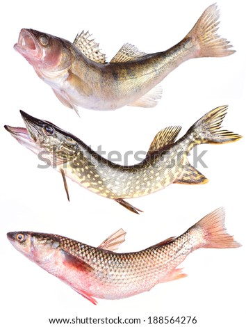 Fish collection - stock photo