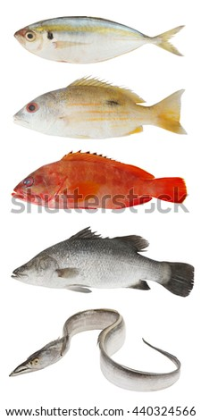 Fish collection, fresh fish isolated on white background - stock photo
