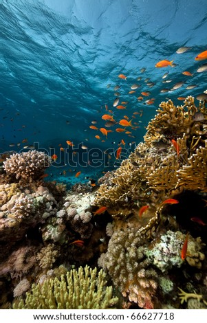 Fish. coral and ocean. - stock photo