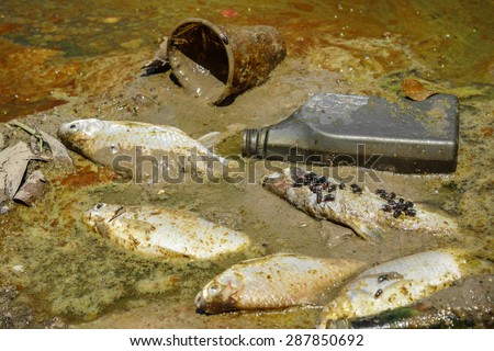 fish die due to water pollution / waste water / water pollution - stock photo