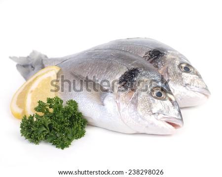 Fish dorado   - stock photo