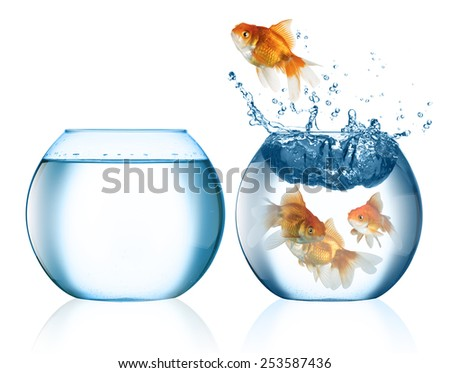 fish escape concept - stock photo