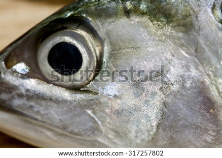 Fish Eye Close-Up,with shallow DOF - stock photo