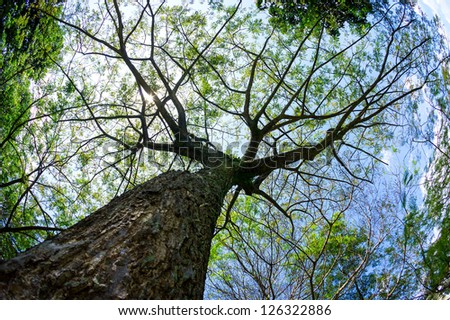 Fish eye view of green tree capture from bottom with sunlight - stock photo