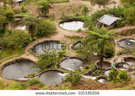 Fish farm in Ecuadorian rainforest - stock photo
