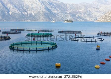 Fish farm in the Bay of Kotor.  - stock photo