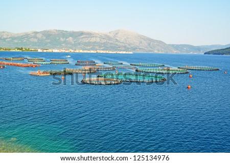 fish farming - stock photo