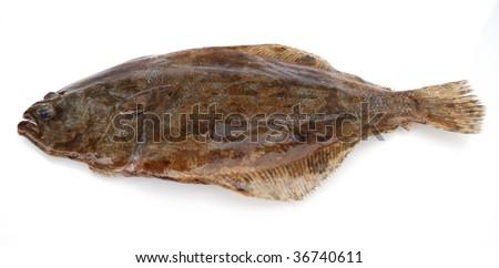 Fish flounder on white background - stock photo