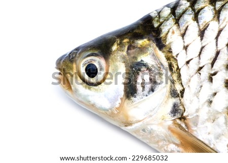 Fish head close-up