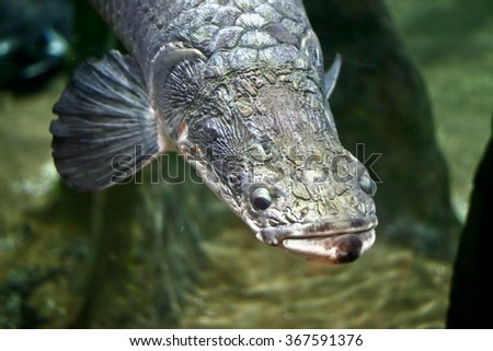 Fish in an aquarium tank - stock photo