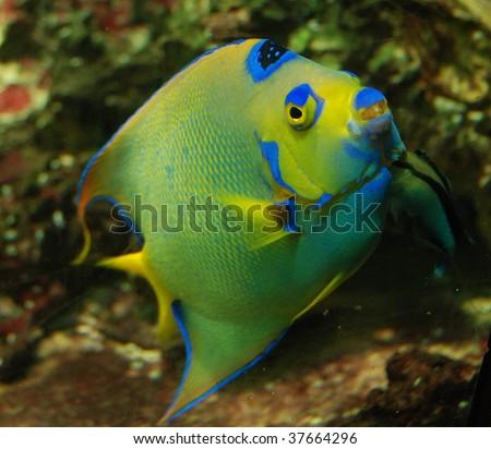 Fish in ARTIS zoo, Amsterdam - stock photo