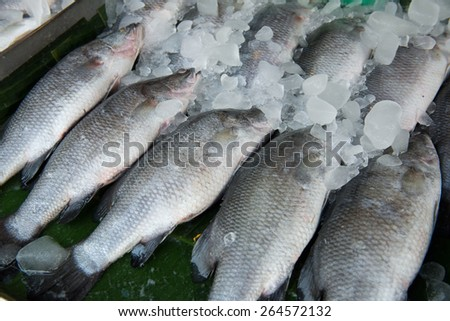 fish in fresh market - stock photo