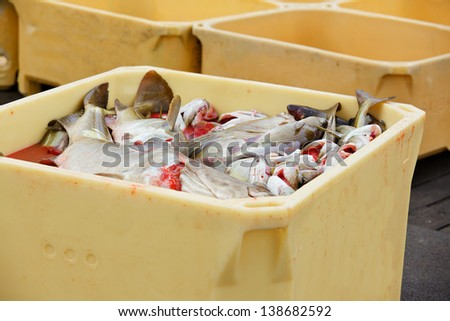 Fish in large plastic fishing containers with ice in Iceland harbor - stock photo