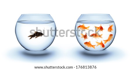 fish in solitude - diversity  concept, racism and isolation  - stock photo