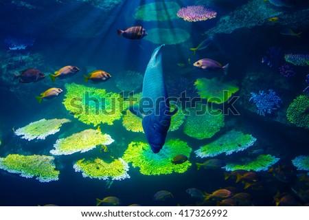 fish in the aquarium in Bangkok, Thailand - stock photo