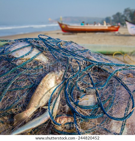 Fish in the net on the beach - stock photo