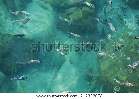 Fish in the ocean/Many fish are swimming in the clear water of emerald color - stock photo