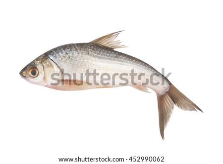 fish isolated on white background, Henicorhynchus - stock photo