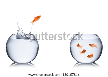 fish jumps out of bowl into another.