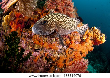 Fish landed on soft corals in Papua, Raja Ampat, Indonesia  - stock photo