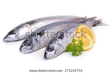 Fish mackerel - stock photo