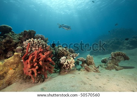 fish, ocean and sun - stock photo