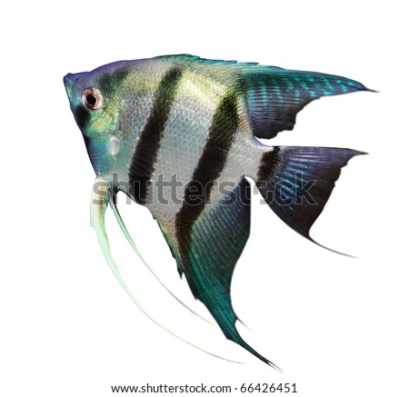 Fish on a white background - stock photo