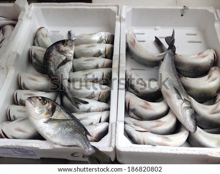 Fish on sale at market   - stock photo