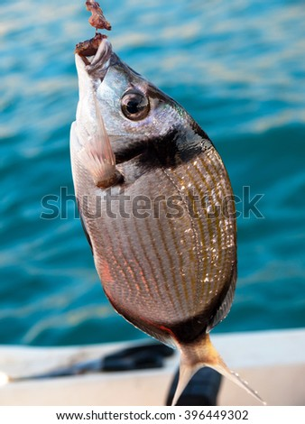fish on the hook on the fishing boat - stock photo