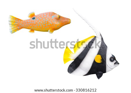 fish on white background. - stock photo