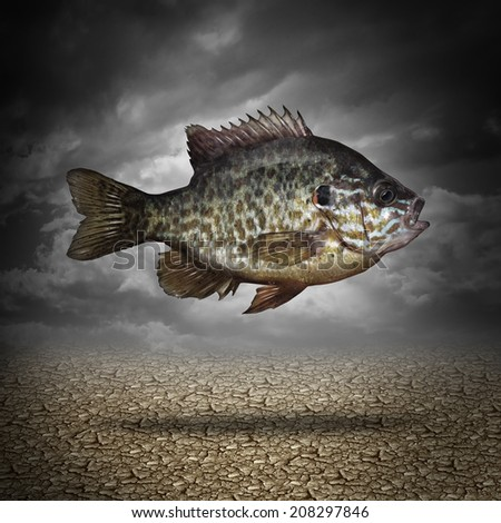 Fish out of water as a business or lifestyle metaphor for adapting to changes in the environment as an aquatic animal floating above dried cracked ground as a symbol of a crisis in climate change. - stock photo