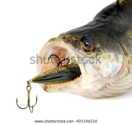 fish predator isolated - stock photo