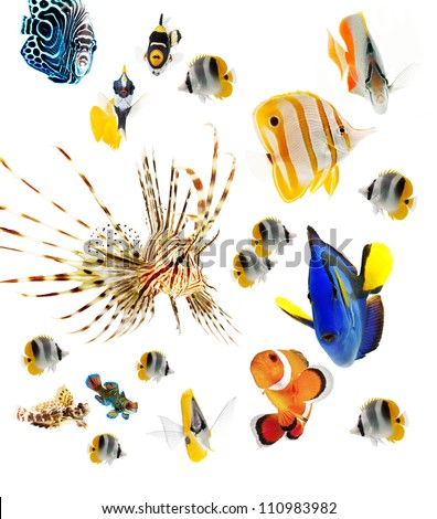 fish, reef fish, marine fish party isolated on white background - stock photo