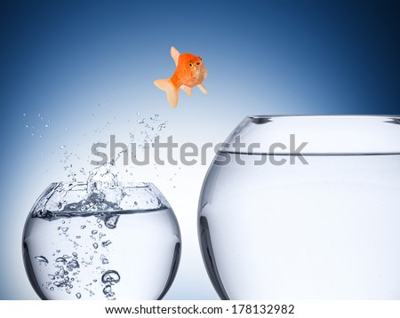 fish rise concept - stock photo