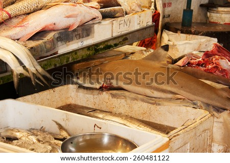 Fish's on the market in Singapore.Shark and other fresh fish. - stock photo