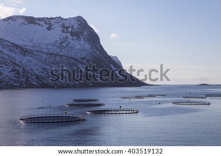Fish,salmon farms in northern Norway. Senja - stock photo