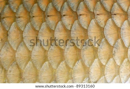 Fish Scales Macro Closeup - stock photo