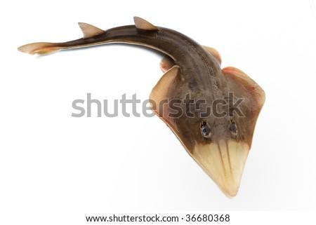 Fish skate on white background - stock photo
