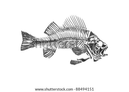 Goliath Grouper Decal P129835 furthermore 532585393 furthermore Fishing Restrictions And Catch Limits additionally Reef Shark Doodle Style 121996663 furthermore Img Ba bass Fishing Logo Apparel. on black grouper