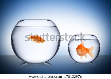 fish social envy concept - stock photo