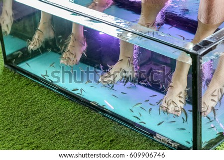 Doctor fish stock images royalty free images vectors for A salon called fish