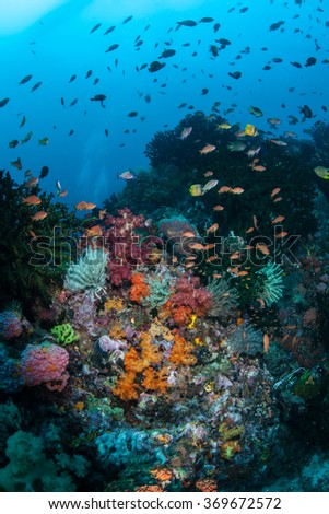 Fish swim above a healthy, current-swept reef in Indonesia. This part of the world harbors extraordinary marine biodiversity. - stock photo