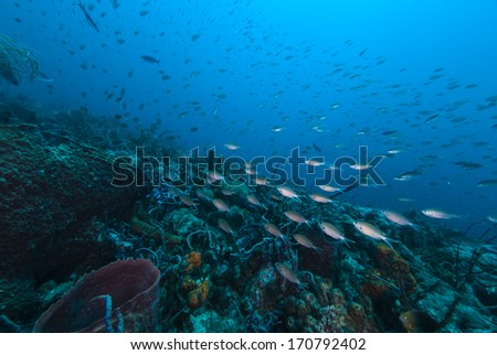 Fish swimming for the depths  - stock photo